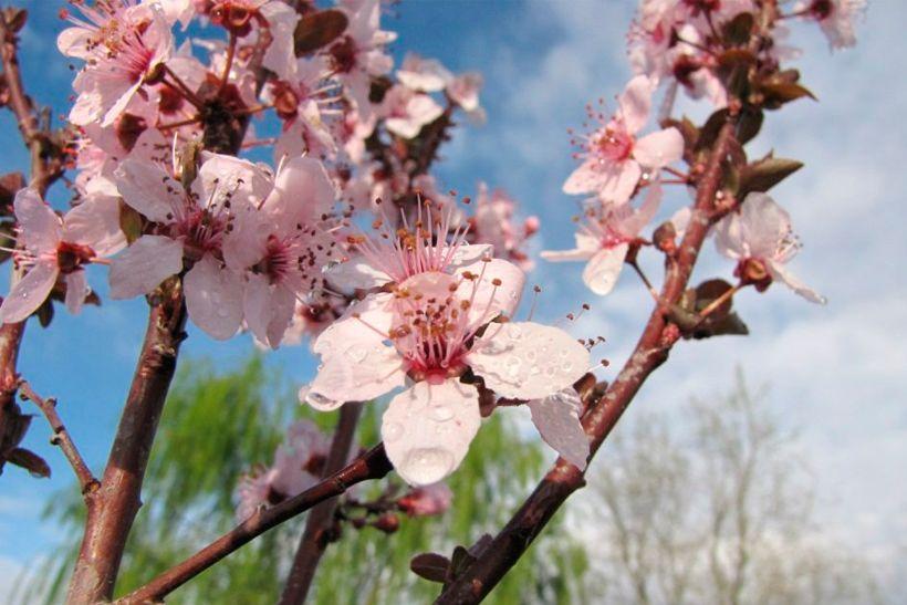 El encanto de la primavera ya se despliega en el Alto Valle