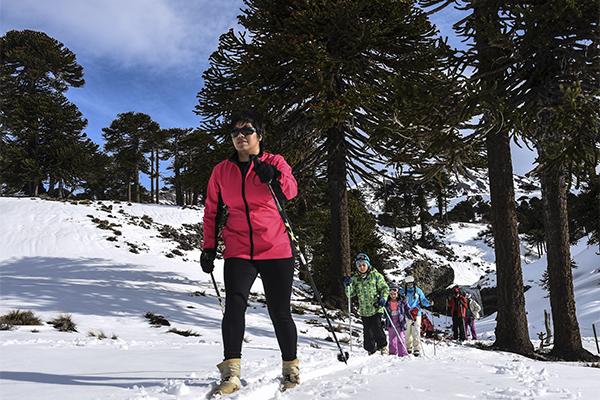 All trekking Caviahue Cascadas del Agrio | Familiar