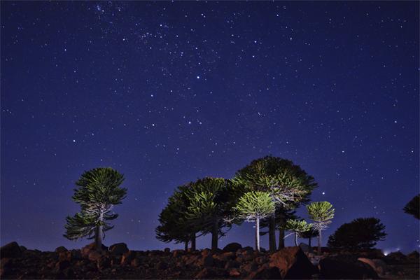 Caviahue Trekking Nocturno | Familiar