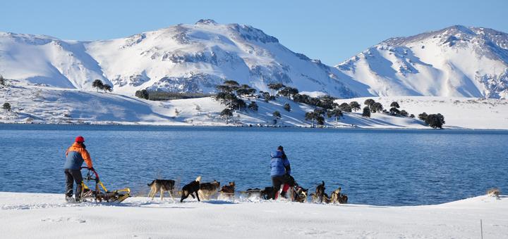 Excursiones en tríneos con Perros Alaskan Huskyes