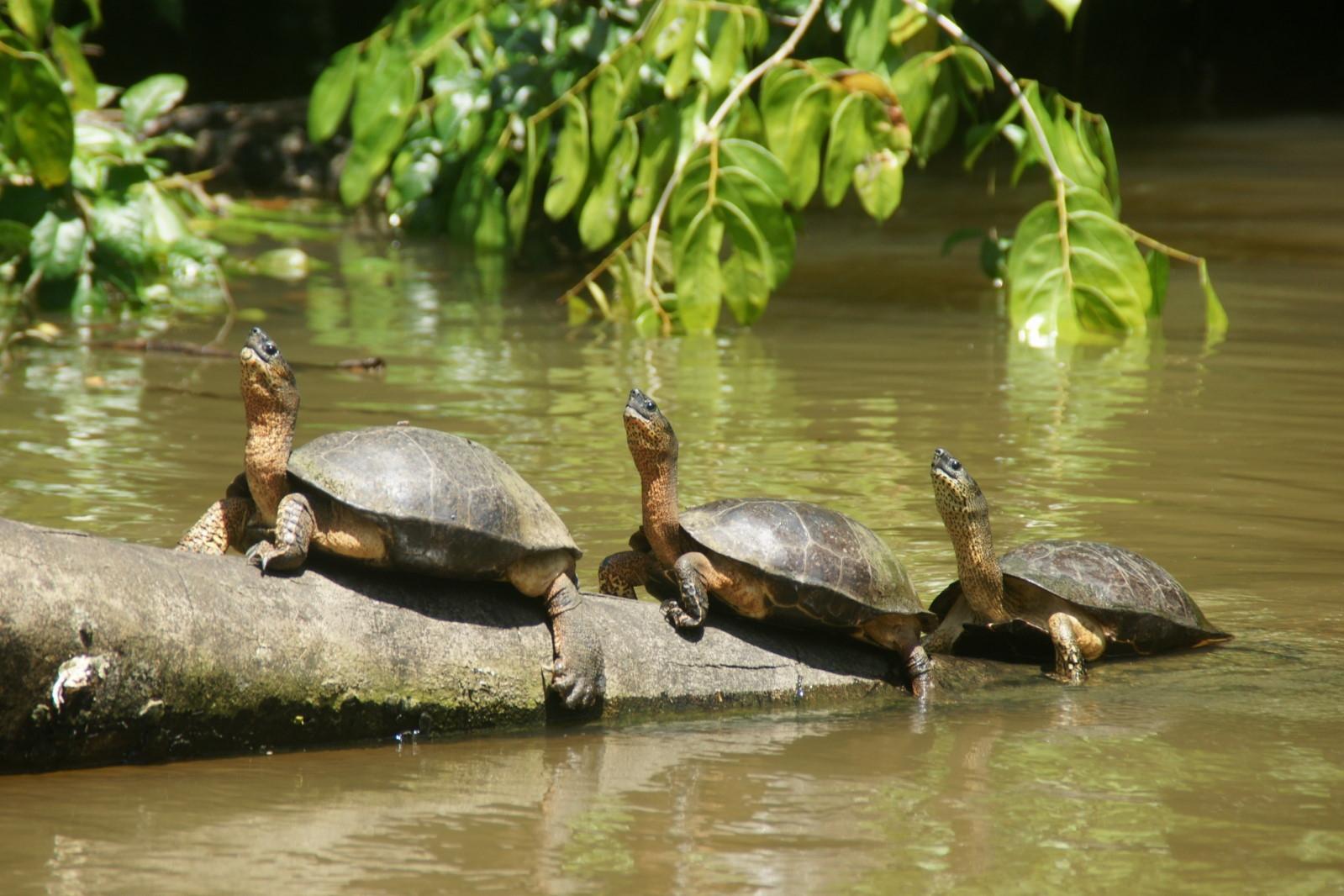 Costa Rica - Salida grupal: Naturaleza, volcanes y playa