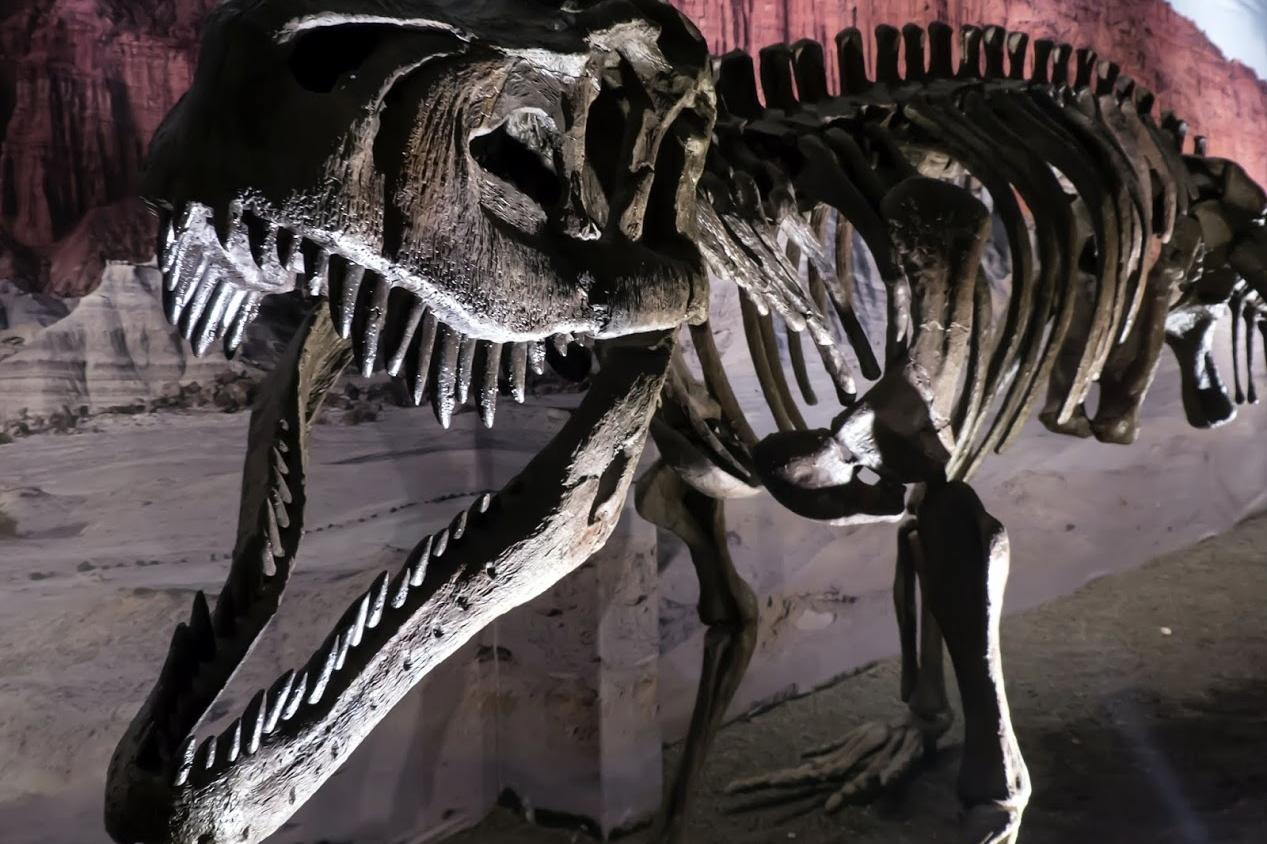 Ruta de los Dinosaurios - San Juan