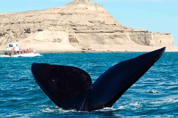 Caviahue (Neuquén) & Puerto Madryn (Chubut)