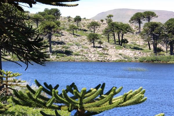 Ruta del Pehuén: Caviahue & Villa Pehuenia - Neuquén