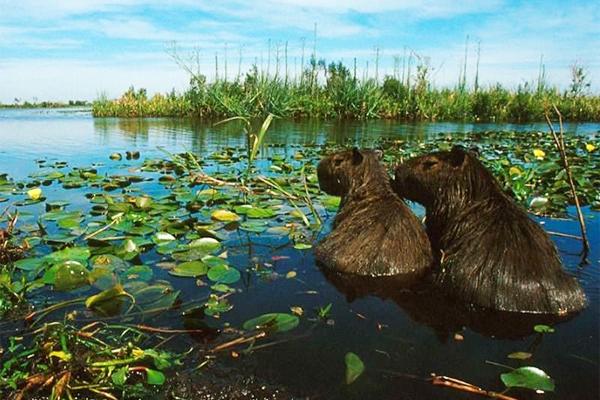 Esteros del Iberá | Corrientes